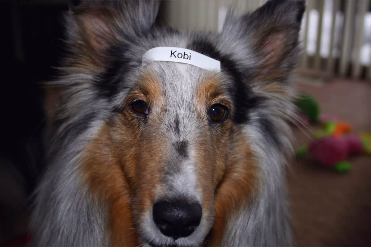 A dog with a label on his head