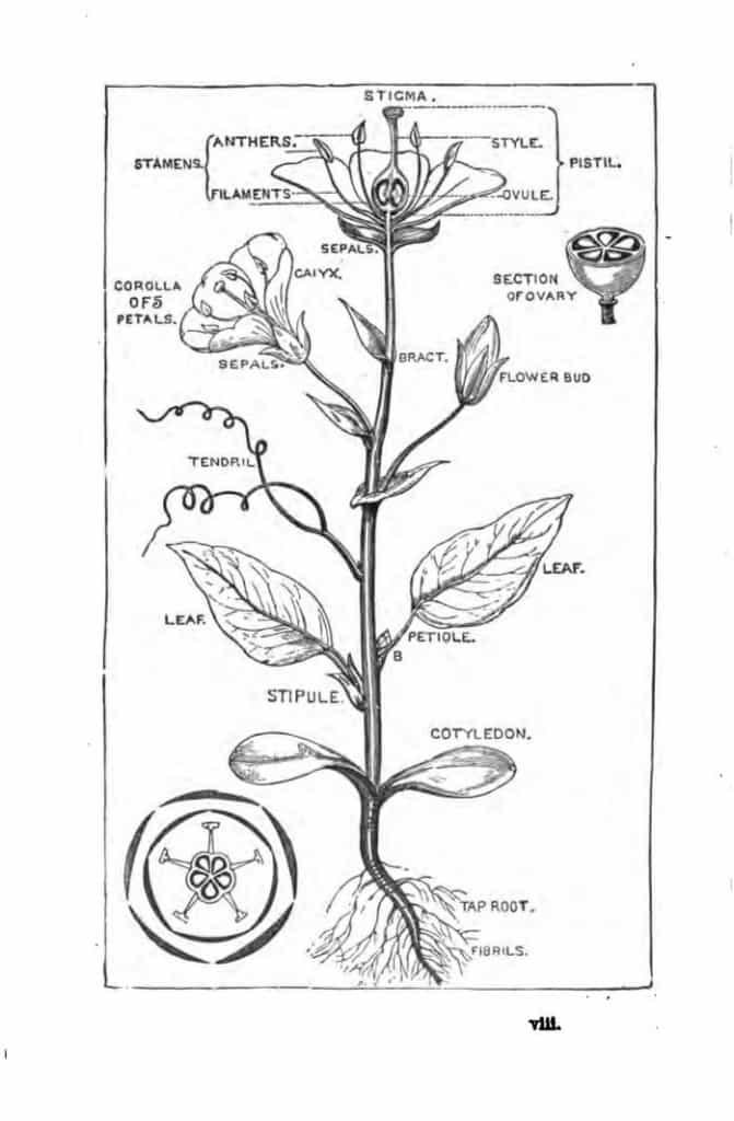 Download: Botany Books For Bsc 1st Year.pdf