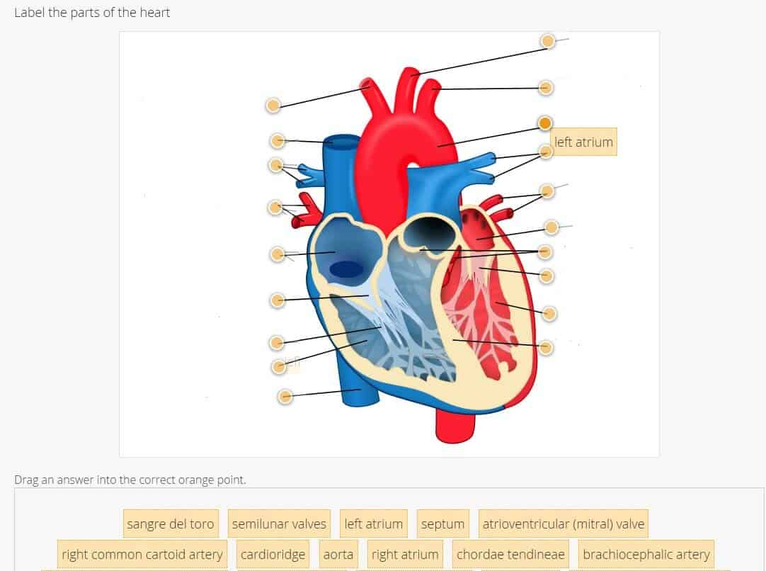 Goconqr online tools to meet homeschool needs homeschool base a diagram of the heart goconqr quizzes have several question types including truefalse image labeling and fill in the blanks so you can decide the pooptronica Images