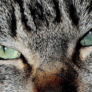 High quality cat image