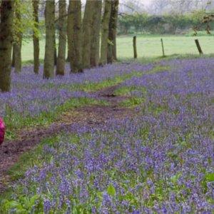 Mother and a preschooler walking in a blue field