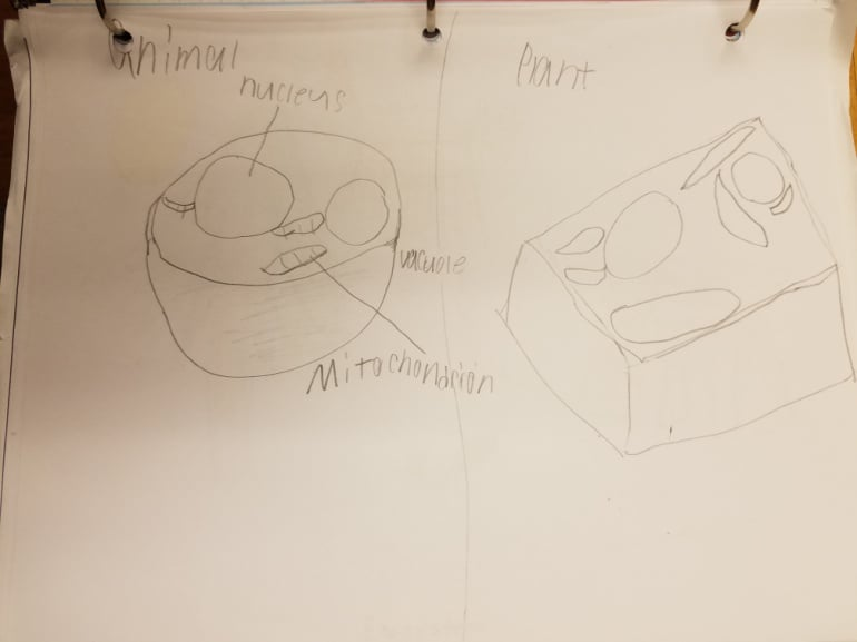 Early childhood drawings