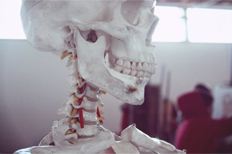 A classroom model skeleton