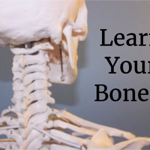 Learn the bones of the human body!