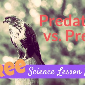 Predator Vs Prey lesson plan for kids
