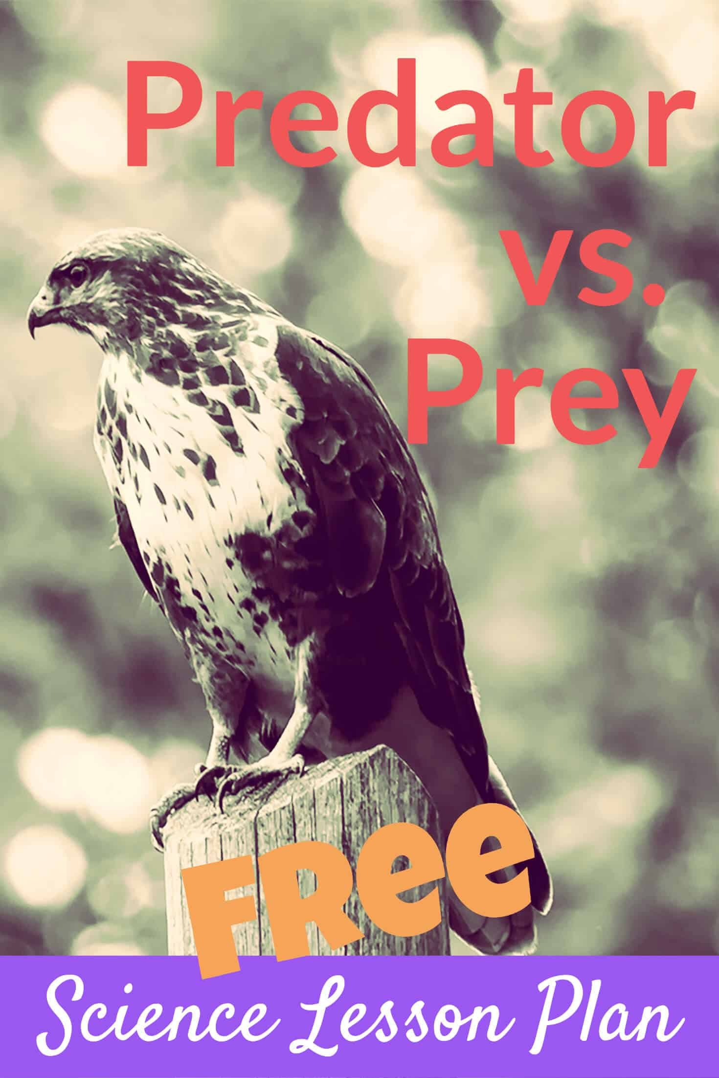 Hawk predator vs prey share on Pinterest